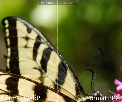 Comparaison : Image WebP vs BPG